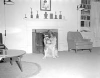 Alpha Beta Mu St. Bernard at Mankato State College, 1964-04-08.