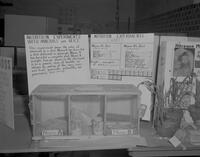 Mouse experiment at Mankato State College Science Fair, 1963-04-17.