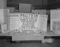 Protein display at Mankato State College Science Fair, 1963-04-17.