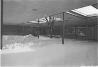A picture of snow and a cleared pathway leading to the Mankato State University Wiecking Center building, 1980s.