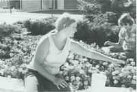 A picture of two Mankato State University students working in a flower garden on the Campus Mall, 1970s.