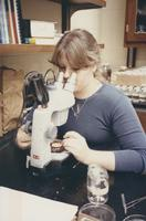 Female chemistry student making observations with microscope, Mankato State University