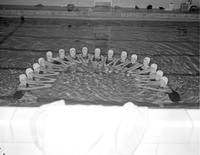 Dolphins in semi-circle formation at Mankato State College, 1959-03-10.