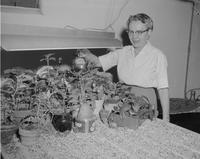 Faculty member waters plants at Mankato State College, 1960-01-30.
